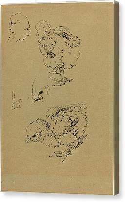 Félix Bracquemond, Chicks, French, 1833-1914 Canvas Print by Litz Collection