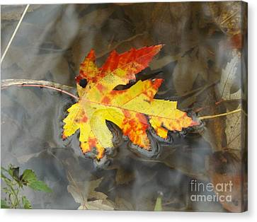 Floating Autumn Leaf Canvas Print