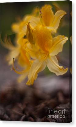 Floating Faeries Canvas Print by Mike Reid