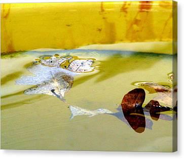 Floating In The Rain Barrel Canvas Print by Selma Glunn