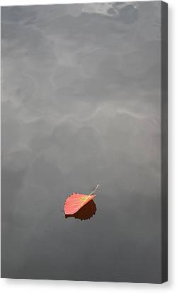 Floating Jewel Canvas Print by Jake Barbour