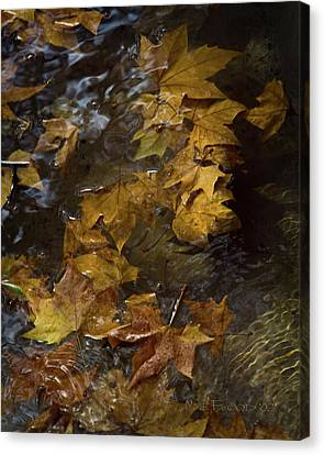 Canvas Print featuring the photograph Floating Leaves - Fall In Rome by Michael Flood