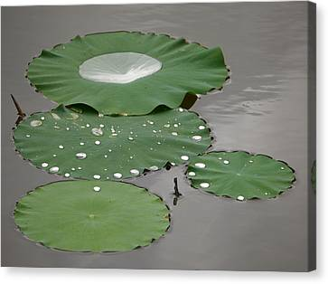 Floating Lotus Leaves Canvas Print by Jane Ford