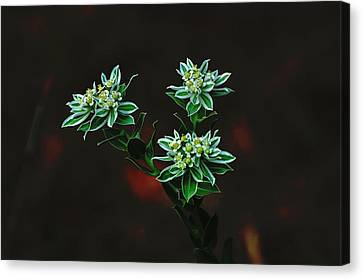 Floating Petals Canvas Print by John Johnson