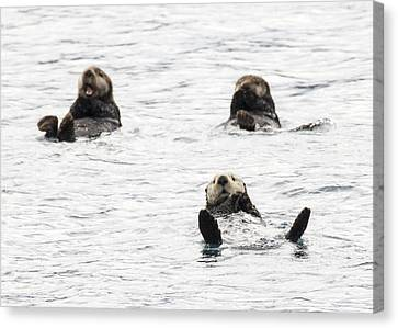 Floating Sea Otters Canvas Print by Saya Studios