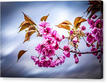 Floating To Earth Canvas Print by Bob Orsillo