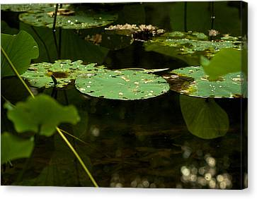 Canvas Print featuring the photograph Floating World 1 - Lily Pads  by Jane Eleanor Nicholas