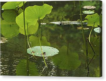 Canvas Print featuring the photograph Floating World #2 - Lotus Leaves Art Print by Jane Eleanor Nicholas