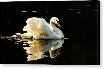 Floats On Peaceful Water Canvas Print by Rose-Maries Pictures