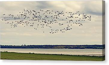Flock Of Birds Canvas Print by Svetlana Sewell