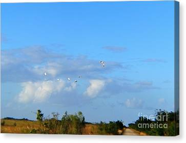 Flock Of Egrets Canvas Print by Andres LaBrada