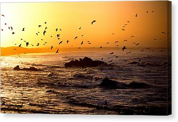 Flock Of Seagulls Fishing In Waves Canvas Print by Panoramic Images