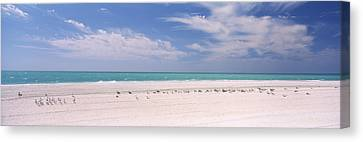 Flock Of Birds Canvas Print - Flock Of Seagulls On The Beach, Lido by Panoramic Images
