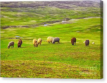 Flock Of Sheep Canvas Print by Gabriela Insuratelu