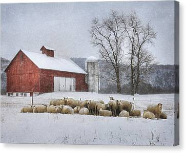 Flock Of Sheep Canvas Print by Lori Deiter