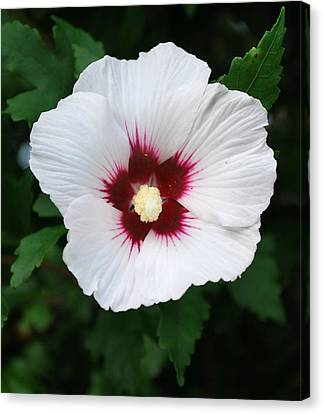 Canvas Print featuring the photograph Flora 2 by Mary Beth Landis