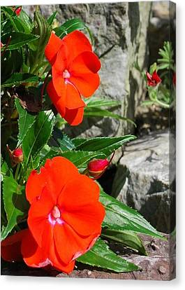 Canvas Print featuring the photograph Flora 3 by Mary Beth Landis