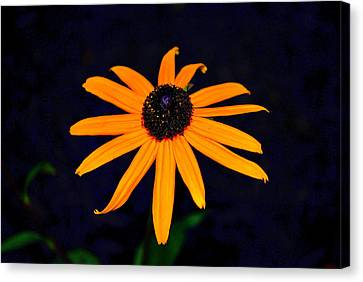 Canvas Print featuring the photograph Flora 4 by Mary Beth Landis
