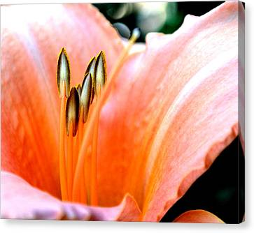 Canvas Print featuring the photograph Flora 5 by Mary Beth Landis