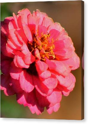 Flora Canvas Print by Rhonda Humphreys