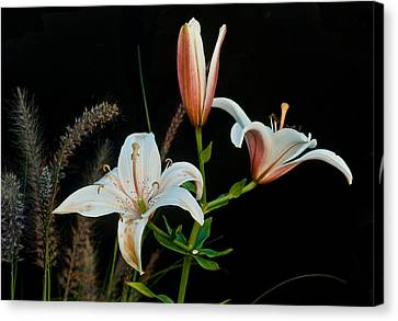 Floral Arrangement Canvas Print by Dan Ferrin