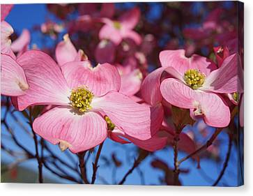 Floral Art Print Pink Dogwood Tree Flowers Canvas Print by Baslee Troutman