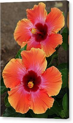 Canvas Print featuring the photograph Floral Beauty 2  by Christy Pooschke