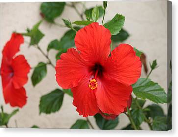 Canvas Print featuring the photograph Floral Beauty  by Christy Pooschke