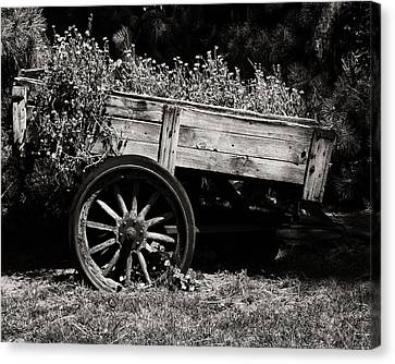 Floral Cart Canvas Print by Camille Lopez