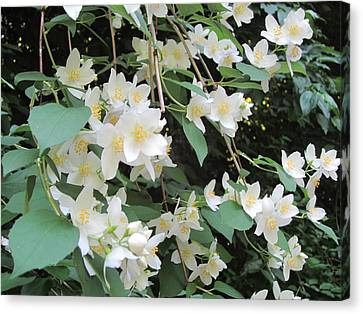 Canvas Print featuring the photograph Floral Cascade by Pema Hou