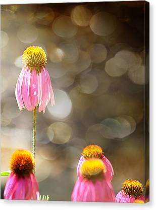 Floral Dance Canvas Print by Margaret Hormann Bfa