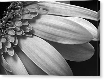 Canvas Print featuring the photograph Floral Detail by Dawn Currie