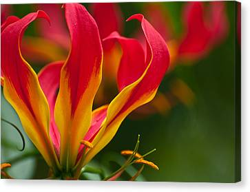 Canvas Print featuring the photograph Floral Flames by Sabine Edrissi
