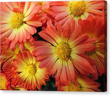 Floral Frenzy 2 Canvas Print