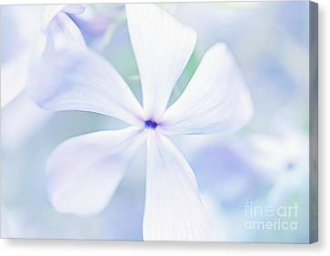 Floral In Pastel Tones Of Blue Canvas Print by Natalie Kinnear