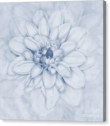 Floral Layers Cyanotype Canvas Print by John Edwards