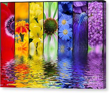 Floral Rainbow Canvas Print by Tim Gainey