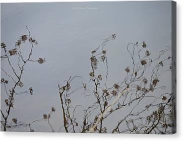 Floral Reflection Canvas Print by Sonali Gangane