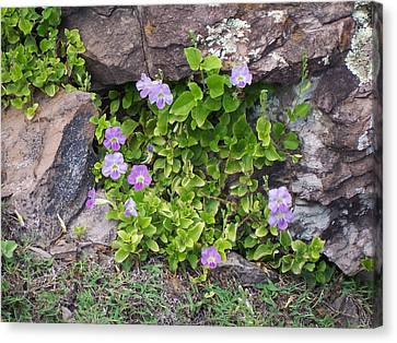 Canvas Print featuring the photograph Floral Relief by Sheila Byers