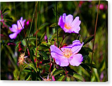 Floral Saturation Canvas Print by Sheryl Burns
