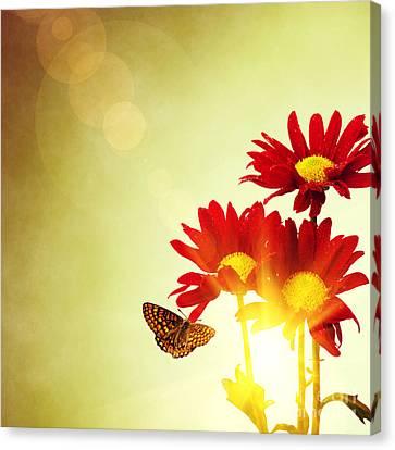 Floral Spring II Canvas Print by Carlos Caetano
