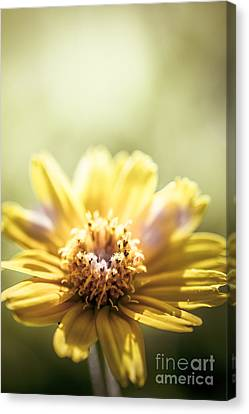 Floral Sunlight Canvas Print by Jorgo Photography - Wall Art Gallery