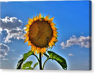 Floral Sunshine Canvas Print by Larry Trupp
