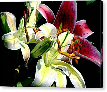 Canvas Print featuring the photograph Florals In Contrast by Ira Shander