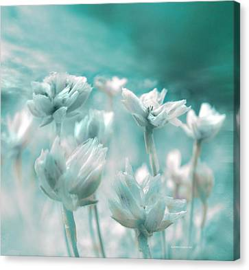 Flores Secas II Canvas Print by Alfonso Garcia