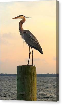 Florida Crane Canvas Print