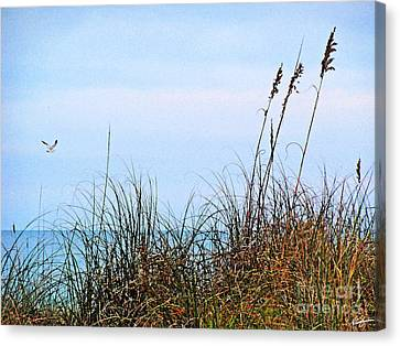 Canvas Print featuring the photograph Florida Dunes by Melissa Sherbon