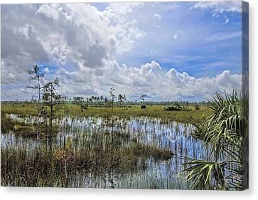 Florida Everglades 0173 Canvas Print by Rudy Umans