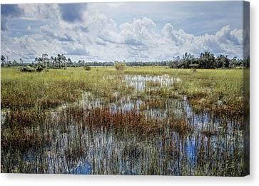 florida Everglades 0177 Canvas Print by Rudy Umans