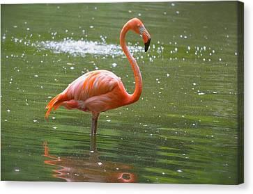 Florida Flamingo 2 Canvas Print